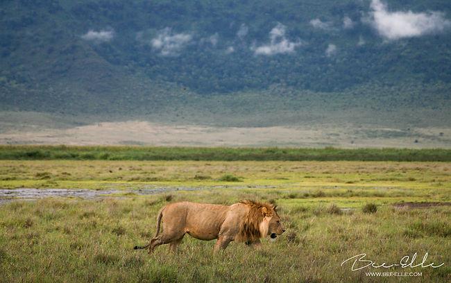 Alpha - Ngorongoro - Tanzania - Bee-Elle