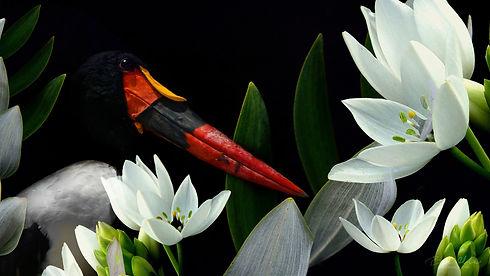 Saddle_Billed_Stork_We_Are_Nature_Wildlife_Art.jpg