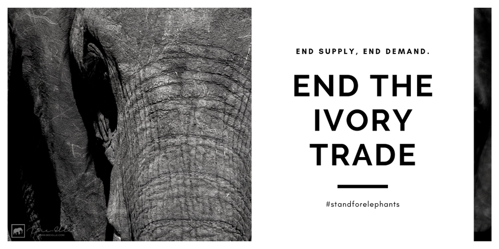 End-The-Ivory-Trade-Bee-Elle.png