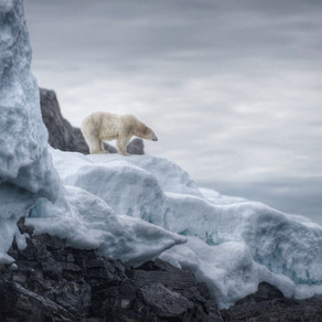 Conservation behind the lens: an interview with Russell MacLaughlin, NatGeo cinematographer