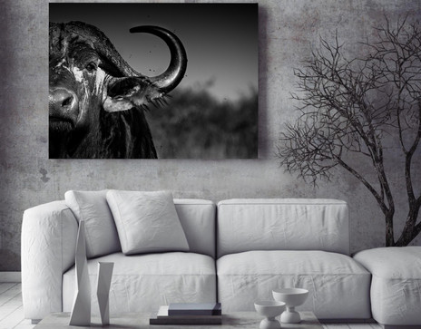 African Wildlife Photography - Prints