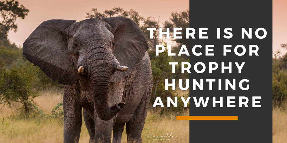 There-is-no-place-for-trophy-hunting-anywhere-bee-elle.png