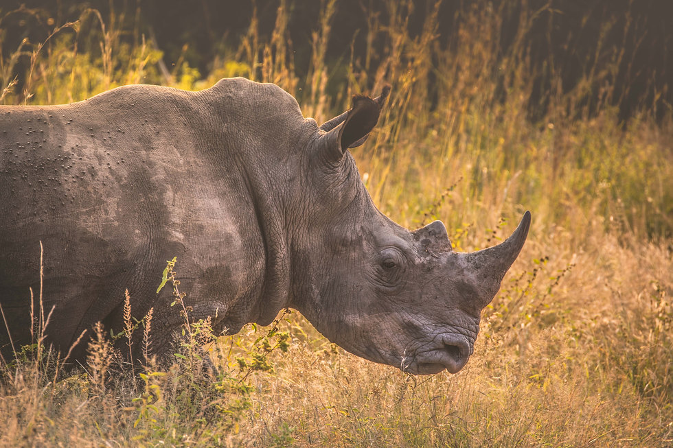 Rhino-Bee-Elle-Wildlife-Photography-Afri