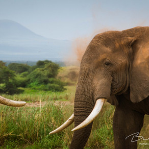 China's Ivory Trade Has Ended