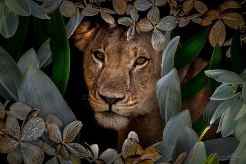 African_Lion_Female_We_Are_Nature_Wall_Art.jpg