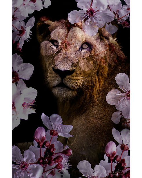 African_Lion_We_Are_Nature_Wildlife_Art.jpg