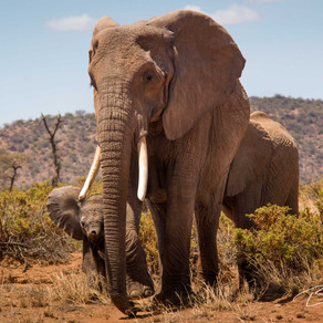 The War on Ivory