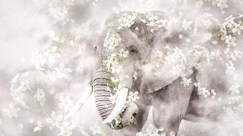African_Elephant_We_Are_Nature_Wildlife_Art.jpg