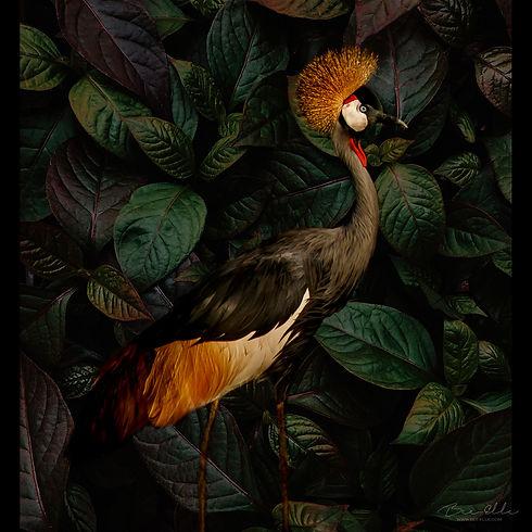 Grey_Crowned_Crane_We_Are_Nature_Wildlife_Art