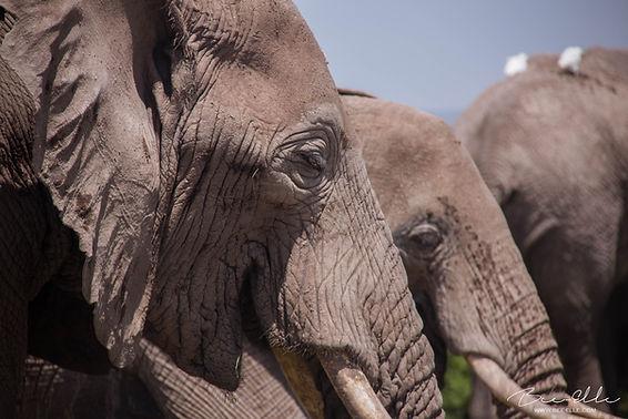 Elephants-Bee-Elle