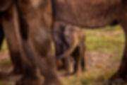 baby-elephant-bee-elle.jpg