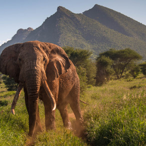 Botswana changes heart and the EU delivers a death sentence to thousands of elephants