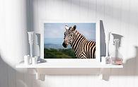 Zebra-Portrait-Spirit-Bee-Elle.jpg