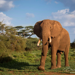 Elephants Are Smarter Than Realised, But Are We Smart Enough To Save Them?