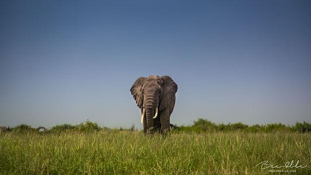 elephant-bee-elle-2828.jpg