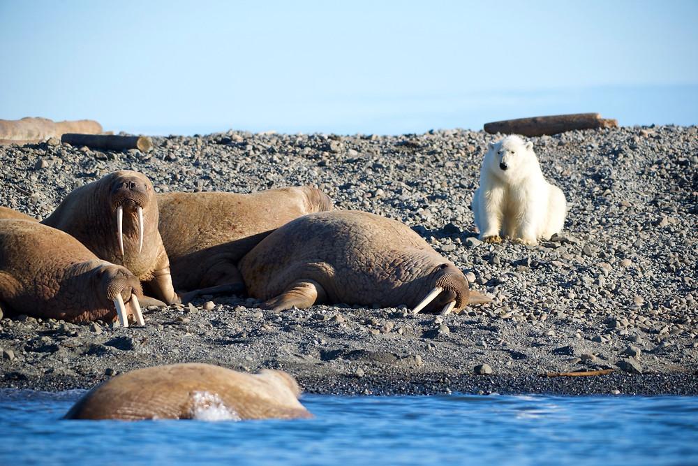 Arctic Circle - Russell MacLaughlin