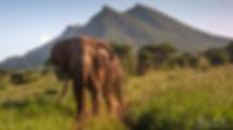 Elephant Bee-Elle