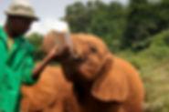 Orphan Elephant