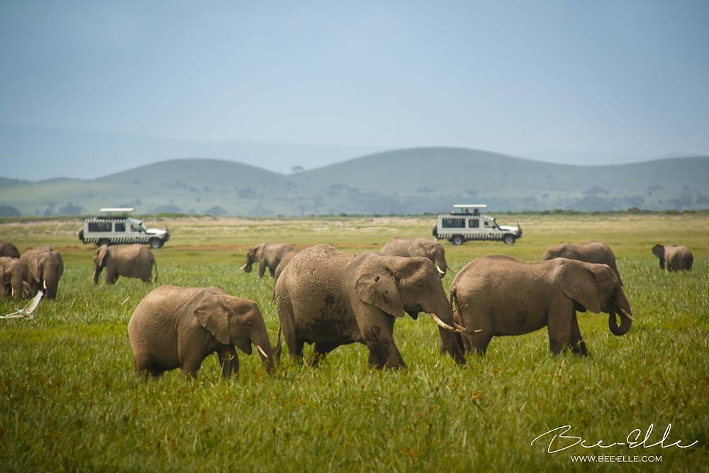 Seeing elephants in the wild on safari
