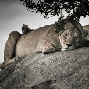 A chat with Adobe on Wildlife Conservation Day