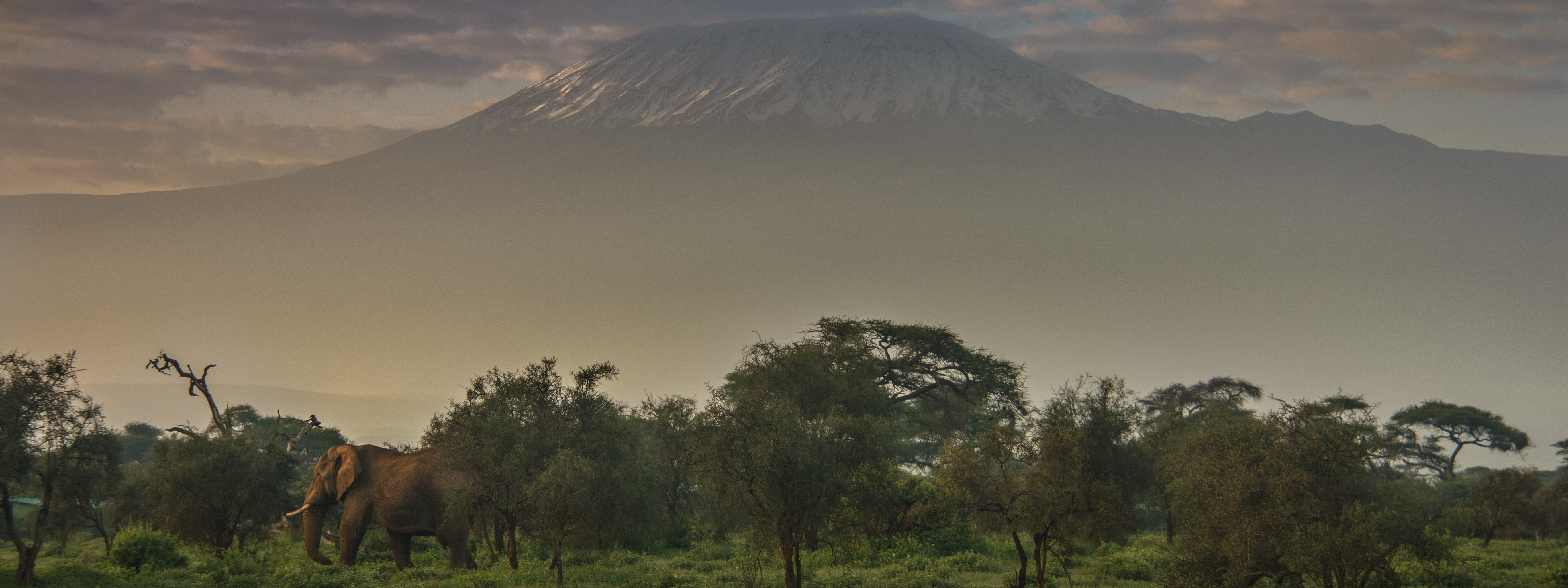 Amboseli Dawn