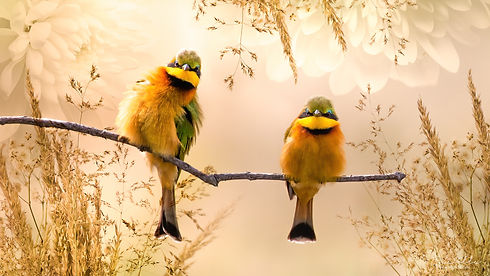 Little_Bee-Eater_We_Are_Nature_Wildlife_Art.jpg