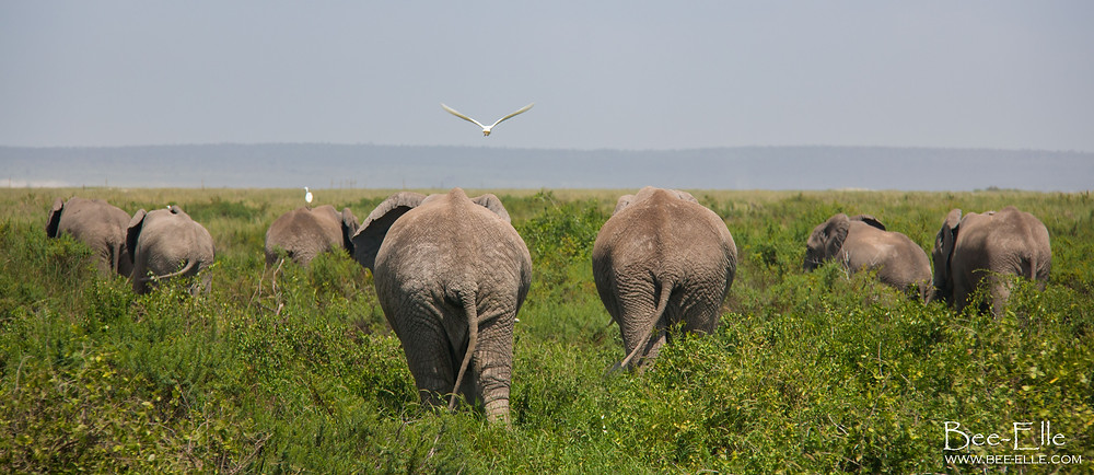 Bee-Elle - African Wildlife Photography - Elephant