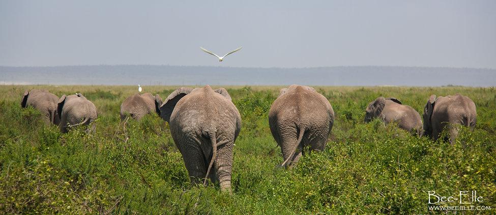 bee-elle african wildlife photography elephants amboseli