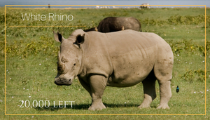 Rhino 5 African animals that should be endangered - Bee-Elle - African Wildlife Photography and Conservation Advocacy