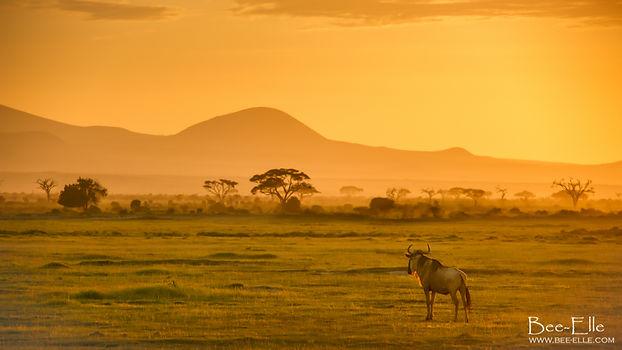 Maasai Mara Sunset Wildebeest
