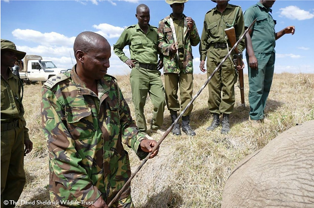 Vets treating elephant speared in Kenya
