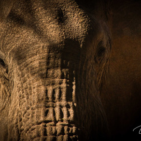 Worth More Alive - The questionable role of trophy hunting