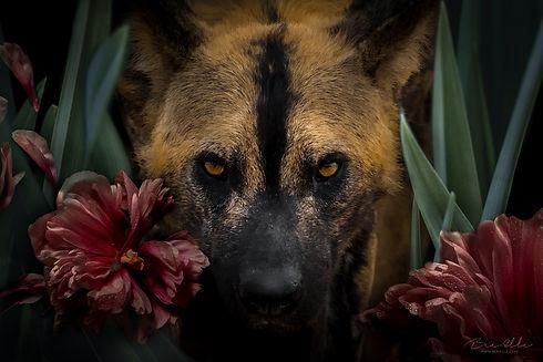 We_Are_Nature_Wildlife_Art_Bee-Elle.jpg