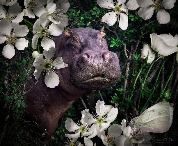 Hippo_We_Are_Nature_Wildlife_Art