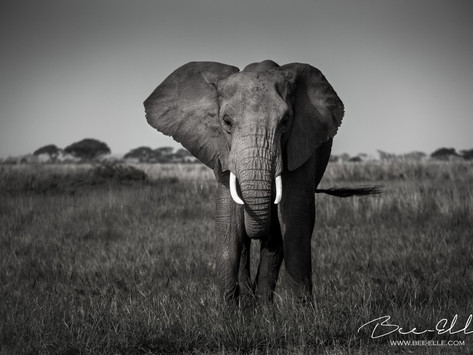 A Tusk Is Worthless Unless It's On An Elephant