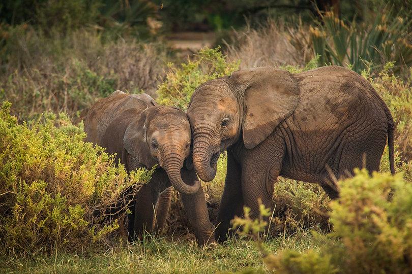 Baby Elephants Kenya