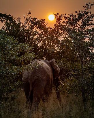 Elephant-Sunset-South-Africa-Bee-Elle
