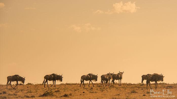 Bee-Elle Africa Wildebeest Maasai Mara
