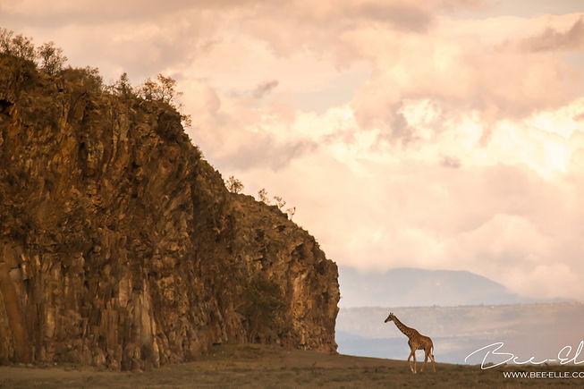 Bee-Elle-Giraffe-Hells-Gate