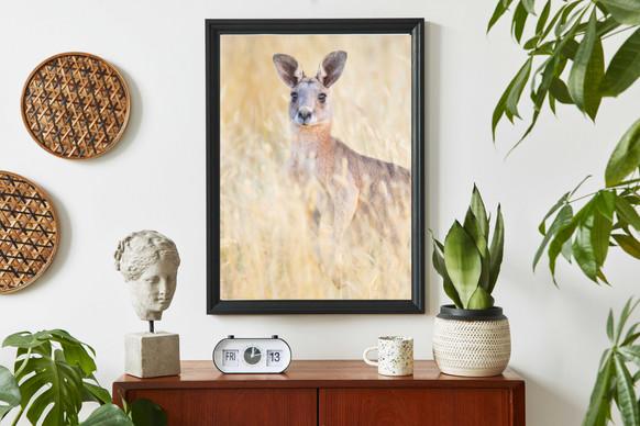 Australian Wildlife Photography