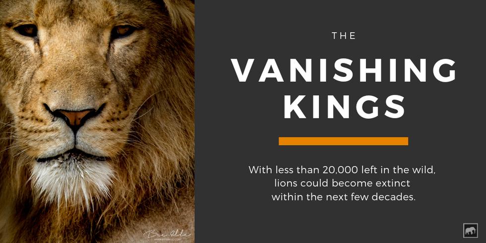 Vanishing-Lion-King-Bee-Elle.png