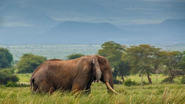 Elephant-Bee-Elle