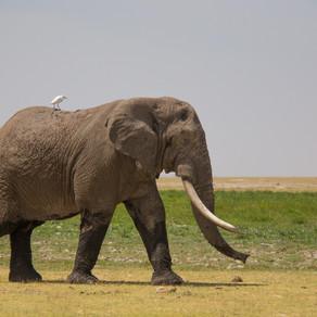 Living in harmony with elephants