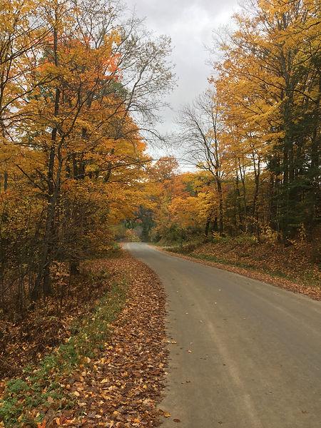 Gravel road through fall foliage trees