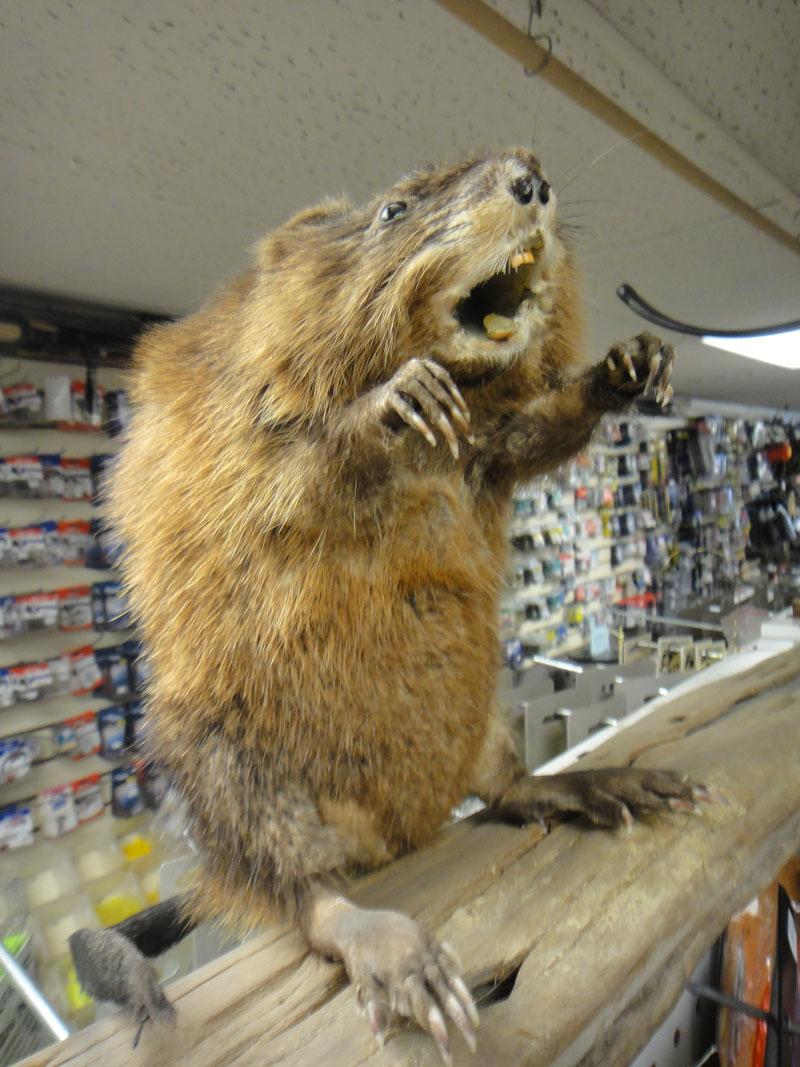 stuffed-beaver.jpg