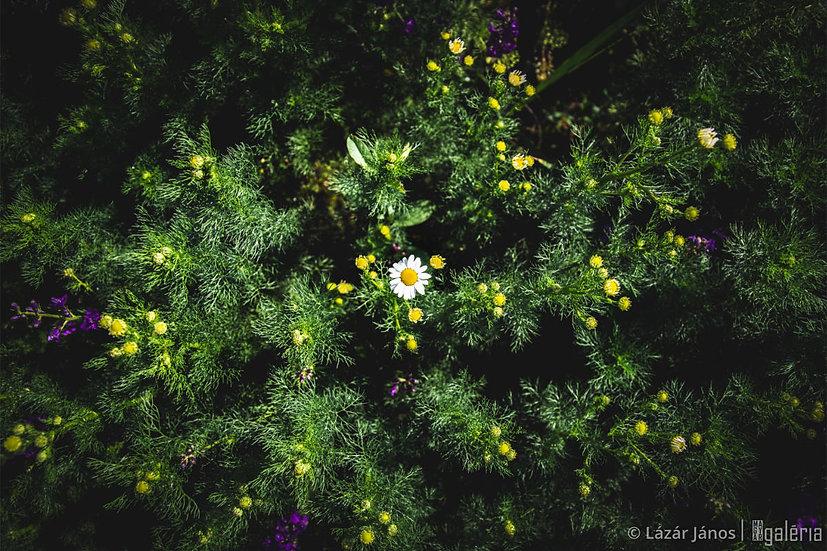 Rengetegben | Lázár János