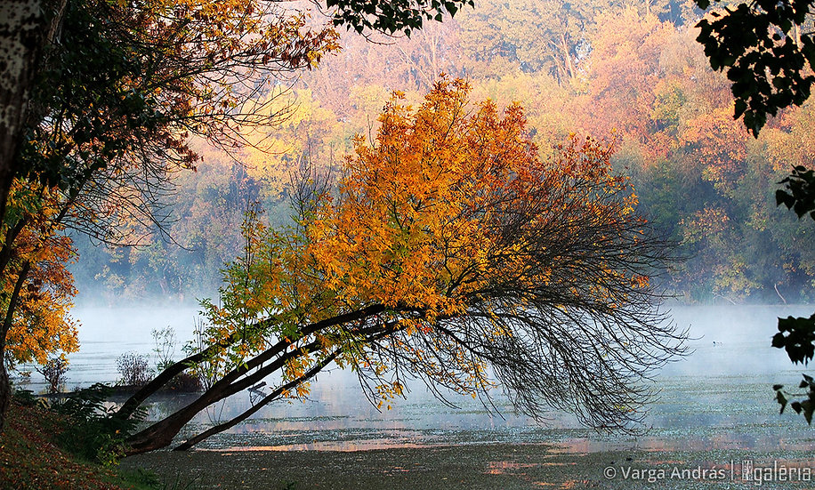 Mártélyi ősz #1 | Varga András