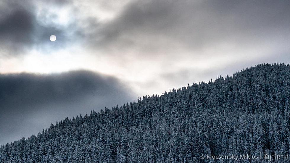 Téli nap | Mocsonoky Miklós
