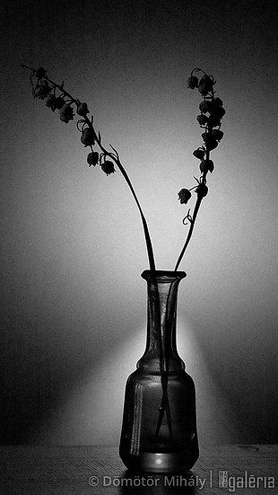 Virág #10 | Dömötör Mihály