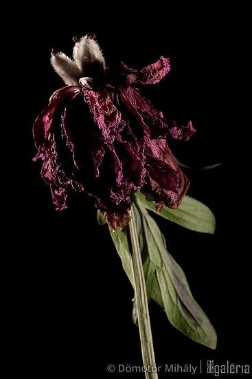 Virág #11 | Dömötör MIhály
